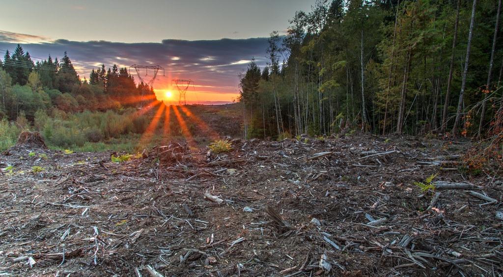 Padure taiata in Maple Ridge BC